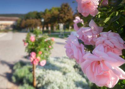 Baden Rosarium photo by Reiner Mirau