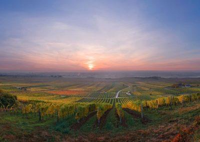 Baden vinyards photo by Reiner Mirau